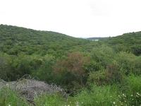 טיול שטח עם יונדאי iX35. מפארק אלונה, דרך הר חורשן, נחל דליה, נחל תנינים לרמות מנשה. מפלים, וריחות פריחה באביב. צילום: רוני נאק