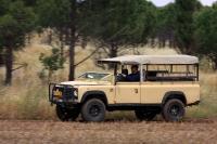מבחן רכב לנד רובר דיפנדר 110. פתוח וחסון - ככה צריך להיראות לנד רובר דיפנדר. החוויה אחרת לגמרי. צילום: רמי גלבוע