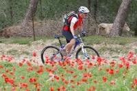 מבחן אופניים GT KARAKORAM. מעלה לא טכני אפשרי לתיקול בעמידה - לא לשכוח לנעול את המזלג - אחיזה טובה מאחור צילום: פז בר