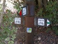 טיול שטח יער חרובית - צילומים מסינגל האופניים של יער חרובית - רכיבת אופניים אתגרית צילום: רוני נאק