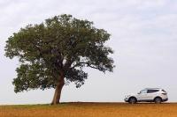מבחן דרכים יונדאי סנטה פה 2013. יונדאי חוזרת לשטח עם דגם חדש לרכב הפנאי. שקמה על גדות נחל שקמים. צילום: פז בר