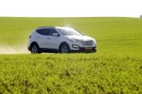 מבחן דרכים יונדאי סנטה פה 2013. יונדאי חוזרת לשטח עם דגם חדש לרכב הפנאי. נביטה בשדות חלץ. שבילי שדות פתוחים לרעייה עבור הסנטה פה החדש. צילום: פז בר