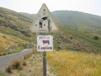 מבחן דרכים מאזדה CX5. יורדים מהגולן ומחפשים פרות מסתובבות. נכון? צילום: רוני נאק