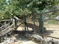 טיול שטח לקבר שמואל הנביא עם יונדאי IX35. קבר שמואל הנביא, מעיינות במבואות ירושלים ושביל אופניים קצר אך עם נוף מדהים. כניסה אחורית אל הנקבה של עין חנה.צילום: פז בר
