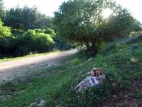 מסלול טיול עם יונדאי IX35 לבית קשת. דרך נוף מטופחת מאד, פינות חמד לרוב, תאי שטח משתנים, ניקיון ושלווה. נירוונה בבית קשת. צילום: רוני נאק