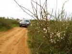 טיול שטח הדרך הסודית בין מכמורת לגבעת אולגה. עם יונדאי IX35 לשמורת טבע קטנה ומאד מיוחדת. צילום: רוני נאק