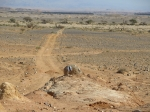 מסלול טיול עם יונדאי IX35. לשמורת שיזף ונחל שחק - שיטים פורחים, זנבנים סקרנים ולטאות מפוספסות. הרפתקה מדברים שני קילומטרים מכביש הערבה. צילום: רוני נאק
