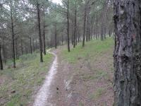 סינגל ביריה למנהלים. מסלול טיול לאופניים ביער ביריה. סינגל חדש יחסית ומטופח מאד בין קברי צדיקים לחדר של הבית בגליל. צילום: פז בר
