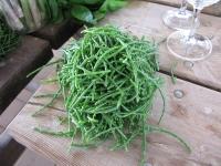 סמארט טורבו ליום הפתוח בערבה. ירקות אורגניים, פיתוחים מיוחדים וטורבו אחד קטן שזולל קילומטרים. צילום: רוני נאק