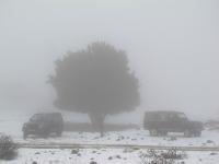 4X4 בשלג. צלליות מוכרות יותר פחות לוטות בערפל הסמיך של יער אודם. התלבטות בין רדיפת שטפונות לבריחה מהמון העם. צילום: רמי גלבוע
