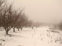 4X4 בשלג. מצא את הדיפנדר הכחול שמתסתתר בין עצי התפוח. צילום: רמי גלבוע