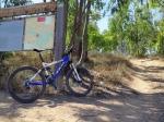 טיול אופניים סינגל גברעם. כמעט 20 קילומטרים, שביל זורם ול אטכני ורובו מוצל. עובר בחורשות אקליפטוס ועל פאות שדות פוריים. צילום: רוני נאק