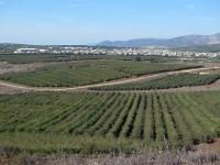 טיול אופני הרים בין יקבי רמת הגולן. מיער אודם עד לקצרין - מבט צפונה לחרמון בוקעתה ומטעי התפוחים - על הדרך מזרחה להר חרמונית. צילום: פז בר