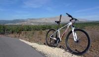 טיול אופני הרים בין יקבי רמת הגולן. מיער אודם עד לקצרין - על שביל הגולן בטיפוס ממטעי התפוחים לראש הר אודם. צילום: פז בר