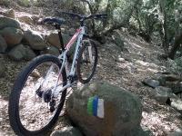 טיול אופני הרים בין יקבי רמת הגולן. מיער אודם עד לקצרין - על שביל הגולן בנבכי יער אודם המקסים. צילום: פז בר