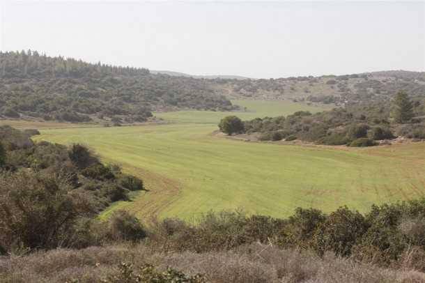 מסלול שטח פארק עדולם. אחו מקסים בין גבעות עדולם. צילום פז בר