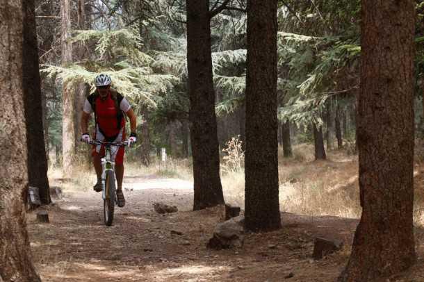 טיול אופניים בצפת. בשום מקרה לא הייתי מוותר על הסינגל המושלם של יער ביריה. בטח לא על אופניים כמו הקנונדייל ג'קיל! צילום: פז בר