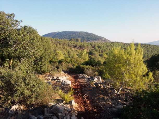 טיול אופניים סינגל יער בית קשת. 22 קילומטרים של כיף על גלגלים. מסלול מהנה אך מאתגר באחת הפינות היפות של ישראל. צילום: רוני נאק