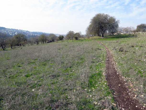 טיול אופניים עם יונדאי IX35. סינגל אלון הגליל הוא מהוותיקים בשבילי האופניים בישראל בחלקו מהיר, בחלקו טכני ותמיד מאד מהנה לרוכב. צילום: רוני נאק