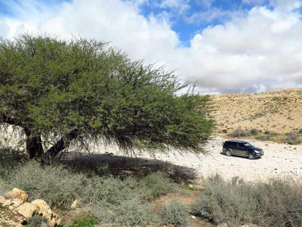 מבחן רכב סאנגיונג רקסטון. לא פוחד משבילי אש וסלעים. טרנספר עם LOW, בקרת משיכה ומהלכי מתלה שימושיים מאד. יש גם בקרת מהירות במורד והראות החוצה מצויינת. צילום: רוני נאק