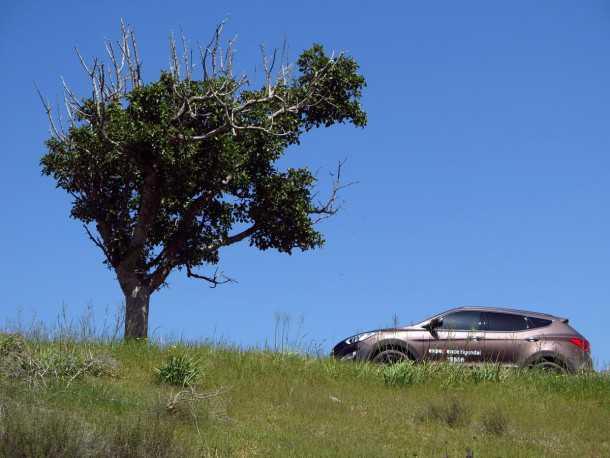 טיול שטח לדרך השקמה עם יונדאי סנטה פה. עץ הדומים הבודד על חרבת מירשן - אבן דרך למסלול הטיול שלנו. צילום: רוני נאק
