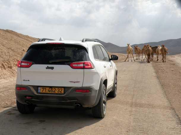 מבחן רכב ג'יפ צ'ירוקי. אלפא בכביש? רק אם הגמלים יזוזו, המנוע לא מרגיש כל-כך חזק וההיגוי מעורפל. שיפור מהותי מול הצ'ירוקי היוצא עדיין לא ברמה של הטובות באירופאיות. צילום: ניר בן זקן