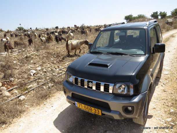 בדרך לכרמים הגליליים של יקב רמת הגולן מרכז המבקרים של יקב רמת הגולן. אנשים ומקומות עם סוזוקי ג'ימני. צילום: עדי שפרן כפרה