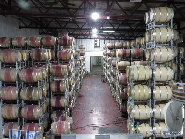 זהו המרתף של יקב רמת הגולן . 8,000 חביות עץ אלון מיישנות כאן את היין בתנאי אקלים מבוקרים. מרכז המבקרים של יקב רמת הגולן. אנשים ומקומות עם סוזוקי ג'ימני. צילום: עדי שפרן כפרה