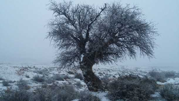 שלג בהרי הדרום. נחל אלות בעת סופת שלג. מחזה נדיר כמו שהוא מדהים. צילום: רוני נאק