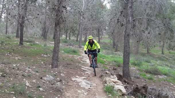 טיול אופניים סינגל יער להב. בין ביער ובין בשטח הפתוח, הסינגל הזה זורם ומהיר ומאד מהנה לקשת רחבה של רוכבי אופניים. צילום: רוני נאק