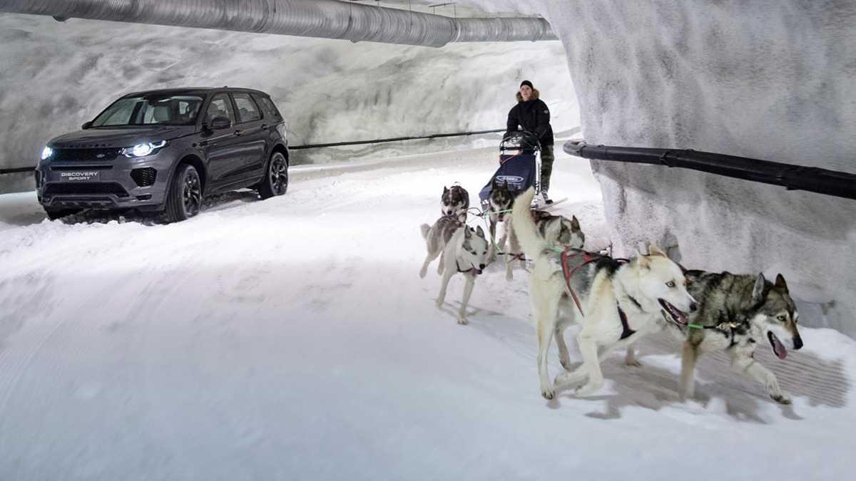 כוח כלב. לנד רובר דיסקברי נגד כלב מזחלות. מי יקח? צילום: לנד רובר