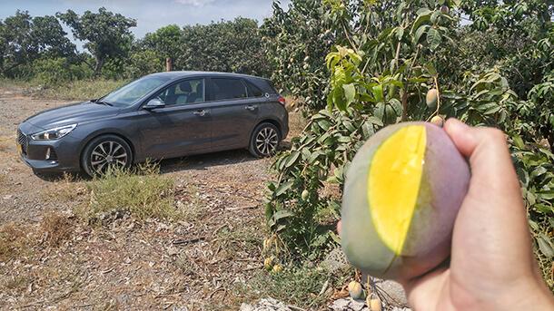 בין מצובה למעלה גמלא - איפה נמצא המנגו הכי טעים? יצאנו לגלות עם יונדאי i30 החדשה. צילום: רוני נאק