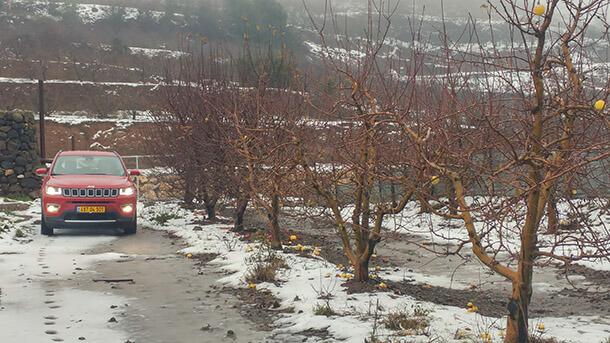 כרם תפוחים בשיא החורף - במקום תפוח אדום יש קומפאס אדום. צילום: שטח