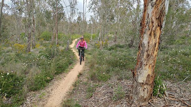 מסלול אופניים בסינגל גברעם המחודש. הזמן הוא זמן הכלניות המשובח בימי השנה לטיול בגברעם. צילום: רוני נאק