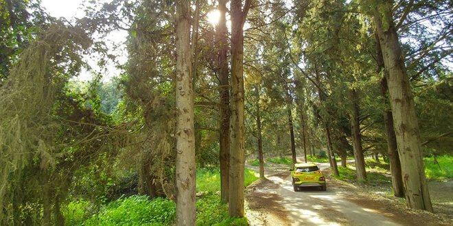 סופגים ירוק ביער הקיבועים עם יונדאי קונה. צילום: רוני נאק